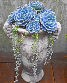 Beautiful Blue Succulent Arrangement