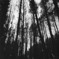 Lancashire woodland in monochrome, created using Ilford HP5 film and a Holga…