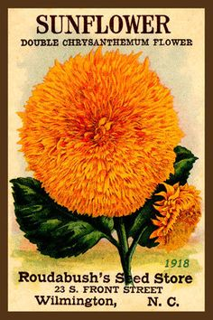 Olde America Antiques | Quilt Blocks | National Parks | Bozeman Montana : Flowers - Sunflower 3