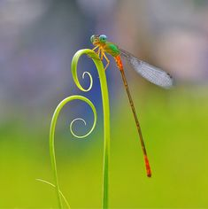 the perfect tendril to show off this insects bright colors