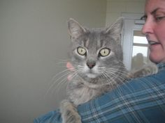 Scully, Litter Box, Animal Welfare, Pet Health, Absolutely Gorgeous, Michigan, Cats, Animals, Gatos