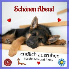 Good Night, Good Morning, Christian Dating Advice, Romantic Pictures, Pin Collection, Smiley, Corgi, Funny, Animals