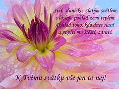 Přání k svátku Obrázky 10 Fnaf, Quotes, Plants, Cards, Facebook, Birthday, Quotations, Plant, Maps
