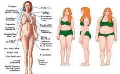 Hypothyroidism Diet - Instead of taking the unhealthy route, try these 3 essential thyroid diet principles to help your body naturally achieve its best thyroid function. - Get the Entire Hypothyroidism Revolution System Today Hypothyroidism Diet, Thyroid Diet, Thyroid Issues, Thyroid Disease, Thyroid Problems, Thyroid Health, Heart Disease, Thyroid Gland, Thyroid Vitamins