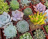 50 succulent assortment for $130