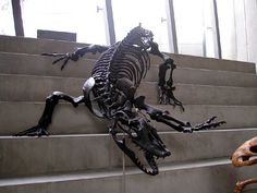 Megalania skeleton. Love the way it is displayed!