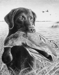 Hunting dog pencil sketch