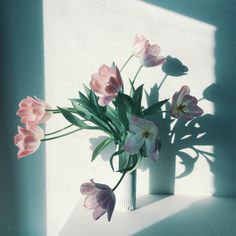 Pink tulips looking out the window. /// www.botanicstilllife.com