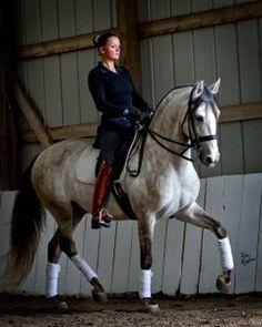 Aladino | Dressage Horses For Sale | DressageMarket.com: