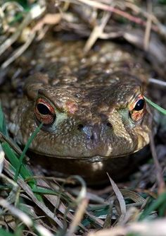 Frogs, toads and newts also go into a state of torpor in winter (Photo: WTML/Bob Carter)
