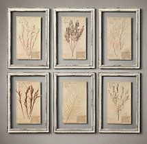 Framed Herbariums Ivory (Set of framed herbarium boards & each one unique & display the organic beauty of genuine botanical specimens from the century. Mounted on paper, each is labeled and framed between two panes of glass. Restoration Hardware, Frames On Wall, Framed Wall Art, Wall Décor, Diy Wall Decor, Diy Home Decor, Art Decor, Decor Ideas, Of Wallpaper