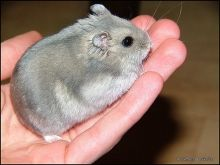 Tips For Hamster Care