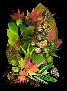 Autumn - Scanner Photography By Ellen Hoverkamp #Photography #Scanner #Autumn