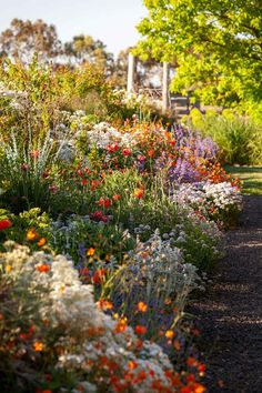 Hardy plants that can survive drought and frost in Australia A deep border planted with geums, salvias, fennel, euphorbia and japonica makes an eye–catching display year–round Dry Garden, Winter Garden, Garden Art, Green Garden, Tropical Garden, Vegetable Garden, Unique Garden, Natural Garden, Orquideas Cymbidium