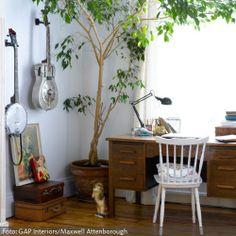 Tausend Mal schöner als eine winzige Zimmerpflanze ist ein großes Exemplar wie dieses. Als Baum für die eigenen vier Wände ist zum Beispiel ein Ficus exotica gut geeignet.