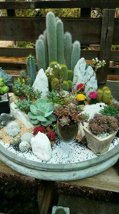 62 DIY Miniature Fairy Garden Ideas to Bring Magic Into Your Home Page 9 of 62 SooPush – succulent garden diy Mini Cactus Garden, Succulent Gardening, Succulent Terrarium, Cacti And Succulents, Planting Succulents, Cactus Flower, Terrarium Wedding, Indoor Gardening, Cactus Plants