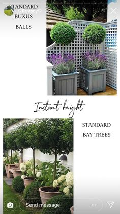 Small Back Gardens, Buxus, Planters, Yard, Patio, Plant, Window Boxes, Courtyards, Garden