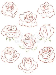 Ensemble de roses. illustration vectorielle.