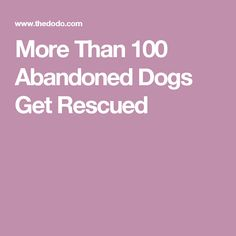 More Than 100 Abandoned Dogs Get Rescued