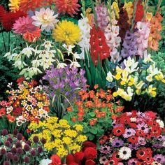 Summer Bulb Collection - Other Flower Bulbs - Van Meuwen