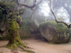 Terreiro das Cruzes Convento dos Capuchos - Sintra  Foto: Vasco Silva