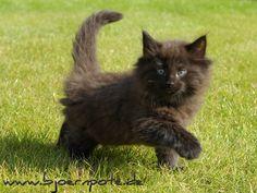 Schwarze Katze Black cat  Wiese katzenbaby  Pussy Deluxe