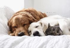 Proof that cats and dogs can be BFFs.