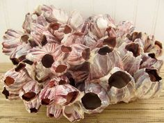Beach Decor Large Purple Barnacle Cluster by PinkPelicanDesigns on ETSY. [just thought this was gorgeous all by itself. jh]