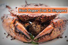 Best Restaurants to go for Black Pepper Crab in Singapore.