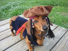 Adorable jack sparrow costume for dachshund Dachshund Halloween Costumes, Dachshund Costume, Funny Dachshund, Dachshund Puppies, Dachshund Love, Pet Costumes, Dog Halloween, Cute Puppies, Daschund