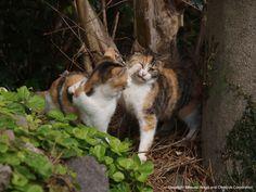日本-4 | ネコギャラリー | デジタル岩合 動物写真家・岩合光昭氏 公認サイト