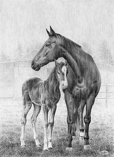 Realistic pencil drawings, horse drawings, ink drawings, colored pencil a. Realistic Pencil Drawings, Horse Drawings, Amazing Drawings, Animal Drawings, Art Drawings, Horse Sketch, Equine Art, Horse Art, Beautiful Horses