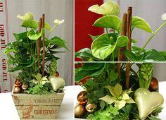 holmsunds blommor: Julgrupp White Queen
