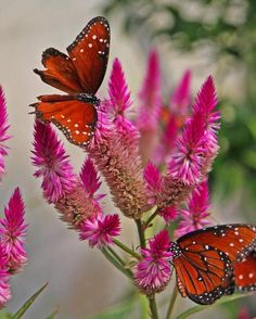 Butterfly, Flower, Orange, Pink, Wings, Dots, Pretty. I can go on, but a thousand words is A LOT.