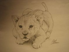 Little Baby Lion by ~cdan777 on deviantART
