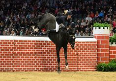 Puissance bareback Jumping | Saddlefree performance, jumper style!