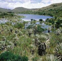 Los páramos, verdaderas fábricas de agua, deben ser protegidos para garantizar su conservación y permitir la continuidad de los procesos evolutivos en este ecosistema de origen reciente.