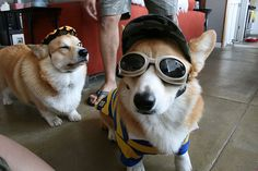 """""""Pancho was a bandit, boys; his horse was fast as polished steel..."""" - Pancho & Lefty, Townes Van Zandt 