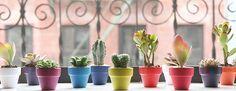 DIY INSPIRATION | Plants & Pots | I SPY DIY