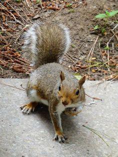 Cheeky squirrel at Elveden Forest Center Parcs