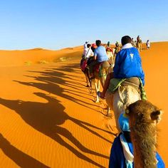 Morocco Lifetime Tours : Morocco Tours, Private Desert Tours From Marrakech & Excursions From Marrakech Cedar Forest, Desert Tour, Cultural Capital, Before Sunrise, Make Pictures, Marrakesh, Fes, Day Tours, Beautiful Landscapes