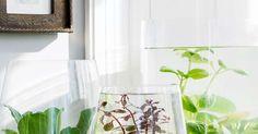 Vihdoinkin kasvi, jota ei voi kastella kuoliaaksi! Jo muutamasta vesikasvista saat hurmaavan puutarhan ikkunalaudalle.