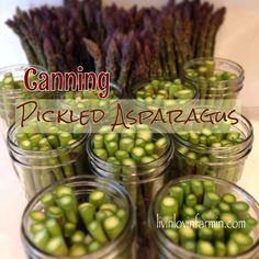 This canned pickled asparagus recipe is super easy and makes about 12 1 pint jars. Asparagus is loaded with nutrients and has anti-aging properties, high in folate, minerals, vitamin K and anti-oxidants Asparagus On The Bbq, Marinated Asparagus, Pickled Asparagus, Asparagus Dishes, Asparagus Recipe, Antipasto, Home Canning, Pressure Canning, Fermented Foods