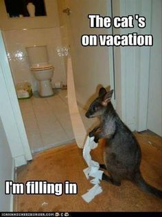 Dump A Day Funny Pictures Of The Day - 84 Pics. The cat's on vacation...I'm filling in...toilet paper party!!!