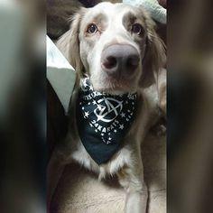 . #weimaraner#longhairedweimaraner#elfi #ロングヘアードワイマラナー#ワイマラナー#愛犬#愛犬家 #dog#mydog#love#cute#dogstagram#photo #dogs#🐶#dogmylife#dogs#24karats#black #instagood#instadog#camera#jp#followme
