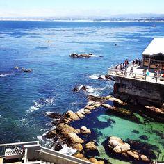 Photo by lovejennifer • Instagram, Monterey Bay Aquarium