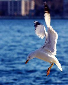 Seagull #air #water