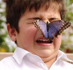 this is why I'm afraid of butterflies