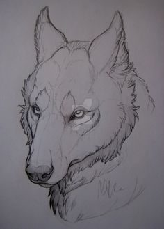 Wolf-head study. by MonsterMyrr.deviantart.com on @DeviantArt