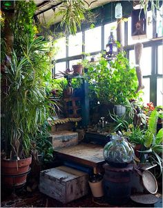 Huis: Serre-Balkon-Veranda-Tuinkamer-Kas-Oranjerie *Porch-Conservatory-Balcony-Greenhouse ~Oase van rust *Oasis of Peace~ Outdoor Spaces, Outdoor Living, Indoor Outdoor, Garden Care, Indoor Plants, Indoor Gardening, Organic Gardening, Pot Plants, Container Gardening
